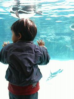 動物園より水族館